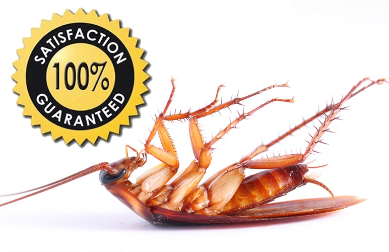 Rentocare Pest control services in Kenya