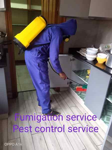 Solcity Fumigation & Pest Control Services in Kenya
